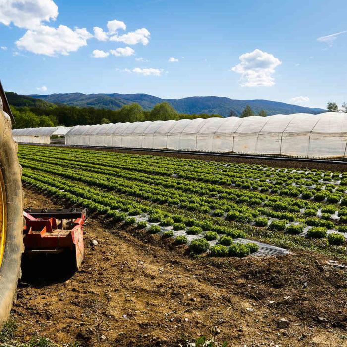 CCNL per i dipendenti di cooperative e consorzi agricoli (2016-2019)