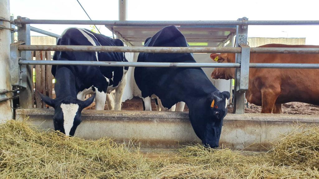 CCNL per i dipendenti dalle organizzazioni degli allevatori, consorzi ed enti zootecnici